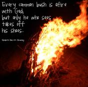 every bush afire